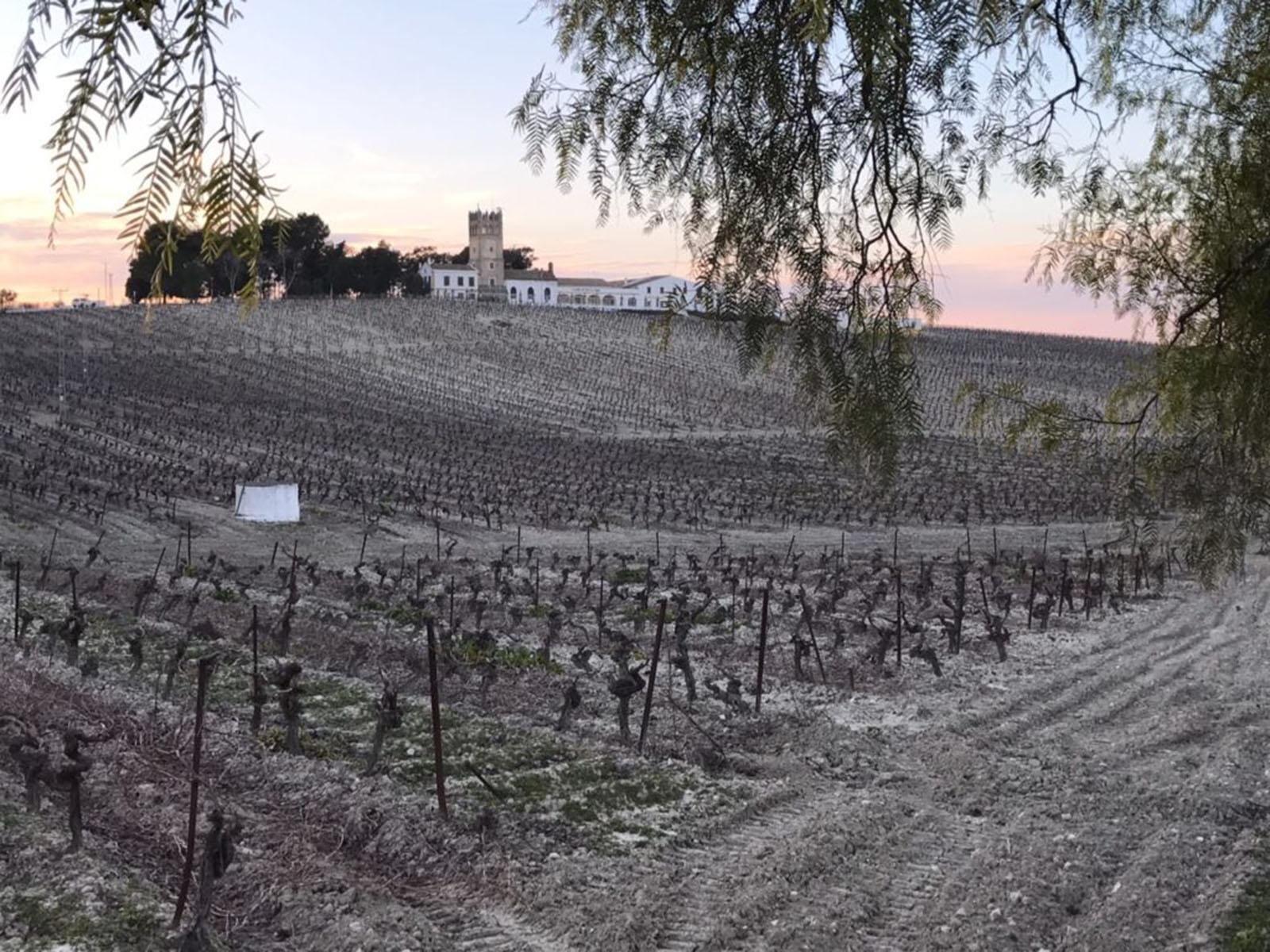 Champagne y Jerez