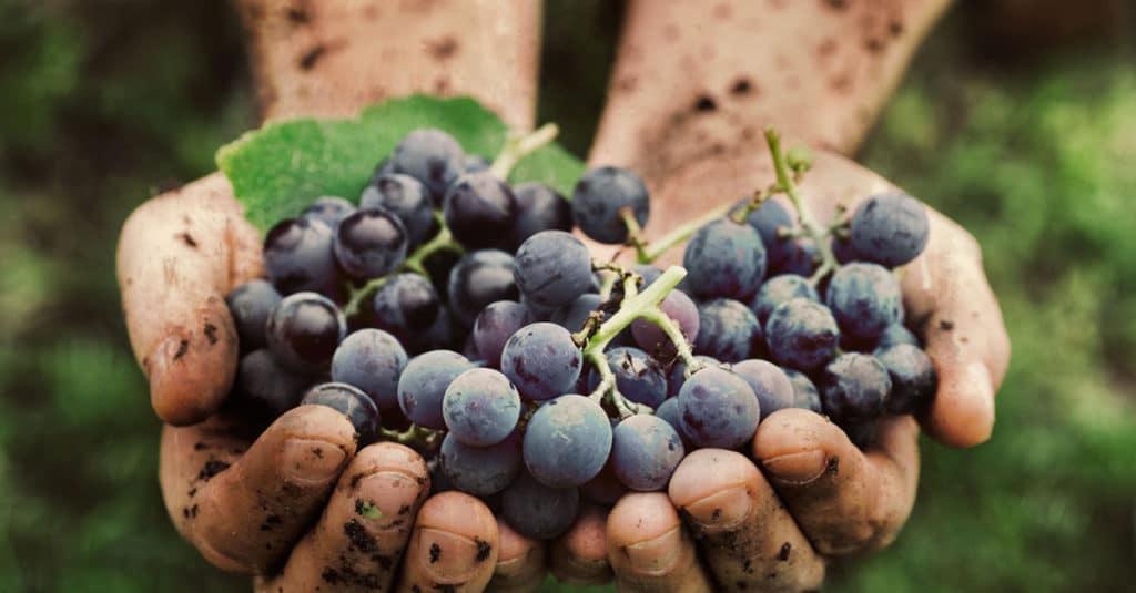 FOTO PARA PLANTILLA DE VINOS NATURALES Vinos-Naturales-1024x535
