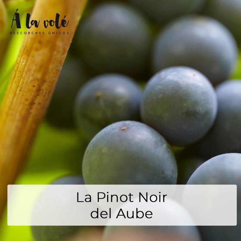 La Pinot Noir del Aube